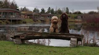 Brompton Lakes, Richmond - Dog Friendly North Yorkshire