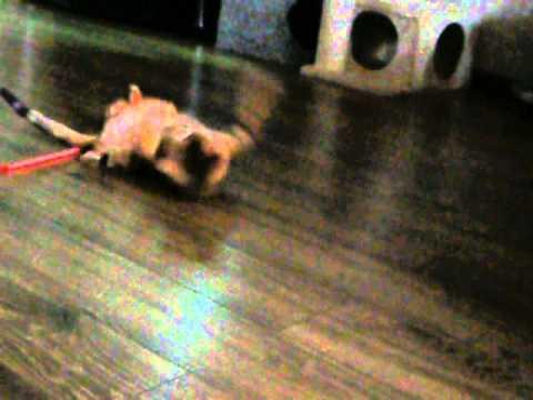 Вязка кота видео