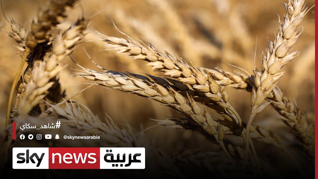 صعود أسعار القمح العالمية لأعلى مستوى منذ 2012