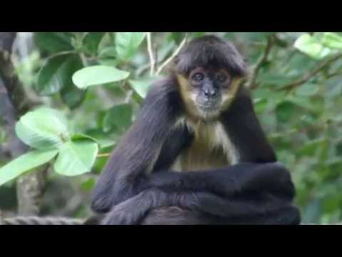 Visiting Animals in The Belize Zoo and Tropical Education Center, Belize City, Central America