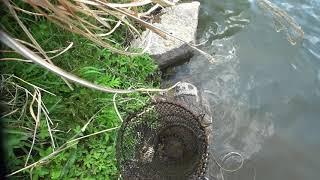 Охота с Рогаткой по реке часть 1 SLINGSHOT FISHING