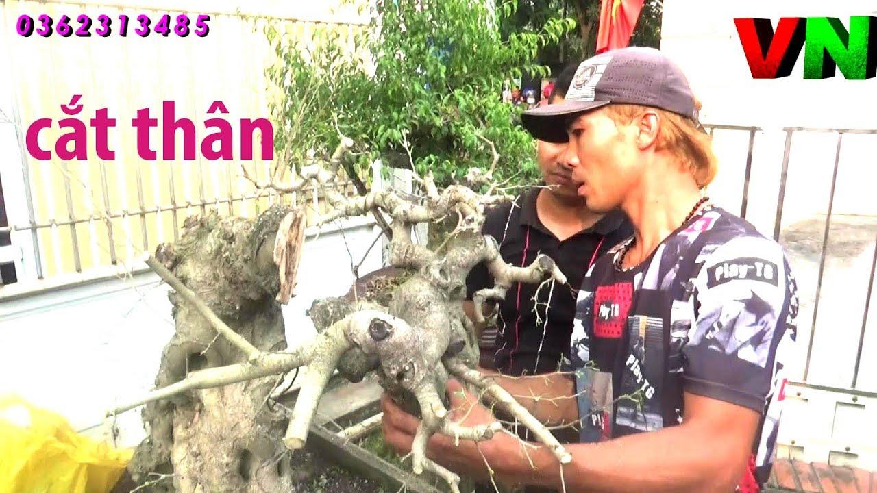 CẮT ĐÔI THÂN CHUYỂN THẾ CÂY (Thuận Đồng Nát) VN 899