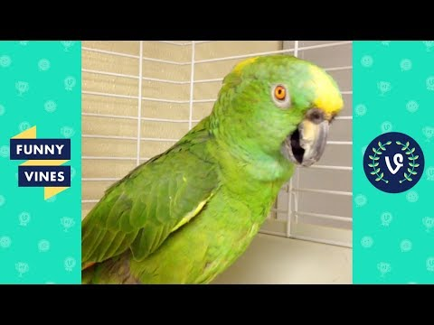 TRY NOT TO LAUGH - Birds & Parrots Funny Animals Fails Compilation | Cute Vines April & May 2018