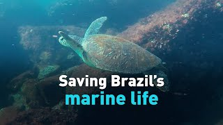 Saving Brazil's marine life