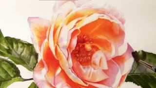 How to paint realistic stunning flowers - Watercolor DVD and Video Online Lessons(Do you want to learn how to paint the multi coloured petals of a Blue Hydrangea, the undulations on Pink Rhododendron petals, the center of a white Daisy, ..., 2014-12-29T22:13:14.000Z)