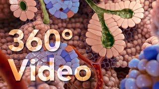 360° Endocrine Cells Animation (demo)
