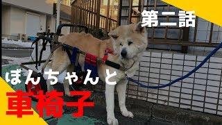 【関連動画】 秋田犬ジャーマンシェパード犬の週末のんびり風景 https:/...