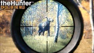 Najlepsze miejsce na polowanie | theHunter: Call of the Wild (#19)