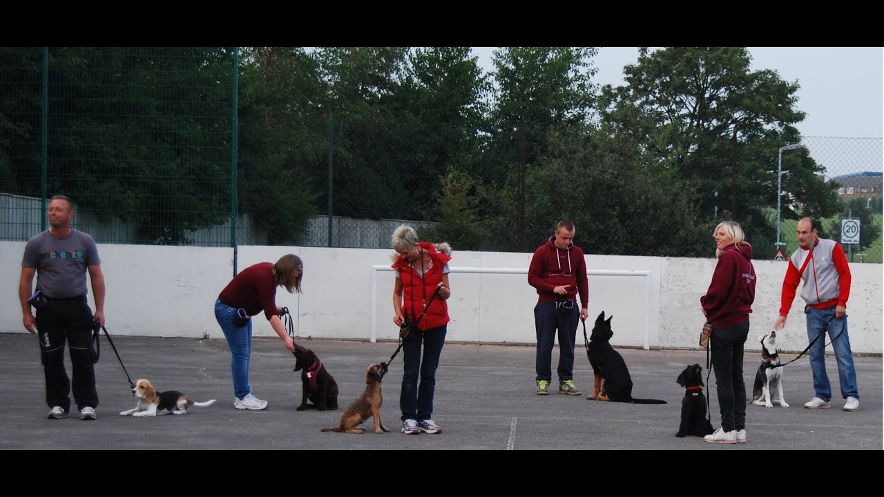 Tim Bleecker Dog Training