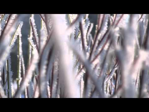 Hard Frost by Andrew Young