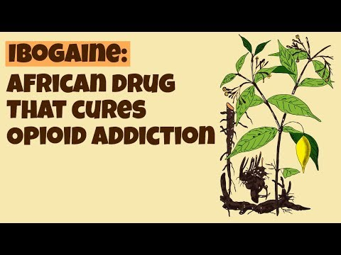 Ibogaine- African Drug That Cures Opioid Addiction: Iboga Plant, Psychedelic Effects & Dangers