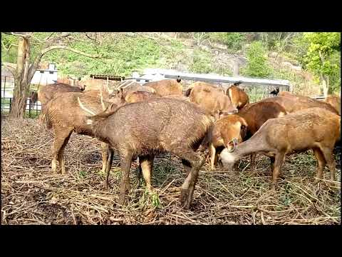 Guwahati Zoo Animals