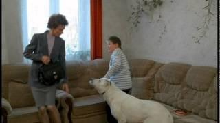 """Ералаш №167 """"Осторожно, злая собака"""""""