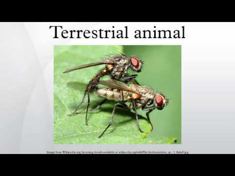 Terrestrial animal - YouTube