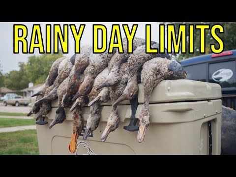 Limits Of Ducks In The Rain | Nebraska Duck Hunting 2018