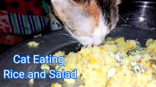 Cat Eat Rice and Salad.