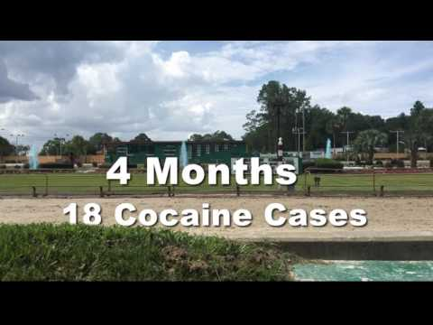 12 greyhounds tested positive with cocaine
