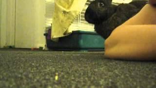 A Bunny Kiss From Samantha