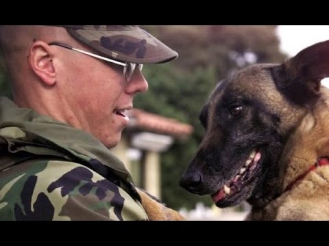 Dogs Welcoming Soldiers Home Part 2