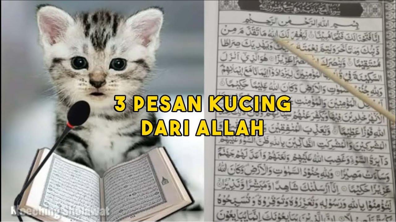 PERHATIKAN.! Jika Ada Kucing Mendekat Saat Makan, Ada 3 Pesan Khusus Dari Allah