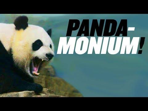 PANDA-monium At Chinese Zoo | China Uncensored