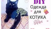 Объявления о продаже котят, кошек и котиков. Британский котенок черный золотистый тикированный, бенедикт. Под заказ. + доставка. 00:12.