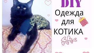 DIY:ШЬЕМ ОДЕЖДУ ДЛЯ КОТА.SEW CLOTHES FOR CAT.(ВСЕМ ПРИВЕТ !!! Меня зовут Елена (Helen Cher) Мой творческий канал называется ZoLushKa TV:) В этом видео я показываю..., 2014-11-07T16:03:29.000Z)