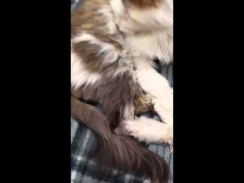 Cat With Bedbugs