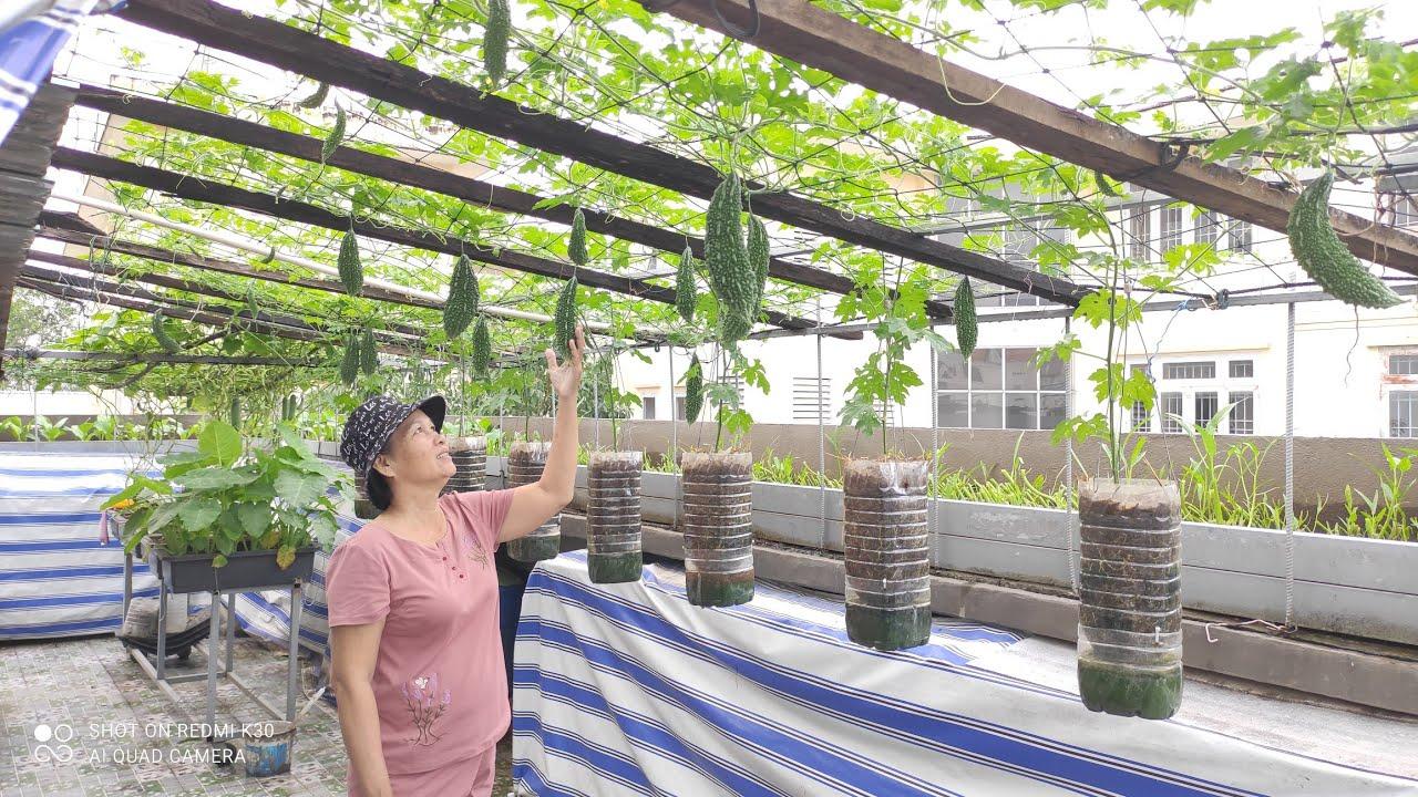 Chia sẻ chút kinh nghiệm , Khổ Qua treo trồng 2 bình 5 lít trái Bự Chà Bá Lửa | Khoa Hiền 350