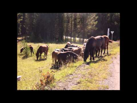дорога жизни иркутск-бодайбо