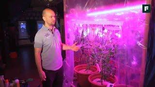 Выращивание помидоров зимой // FORUMHOUSE(Прежде чем выращивать овощи в теплице зимой, наш форумчанин Родион решил поэкспериментировать и прямо..., 2016-12-15T14:04:25.000Z)