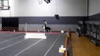 First Akc Rally Excellent Leg, Score 99 Out Of 100