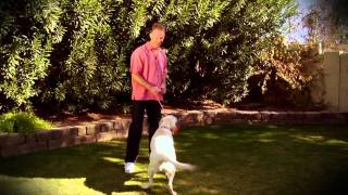 Sam The Dog Trainer