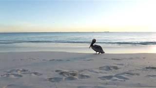 Aruba Relaxation