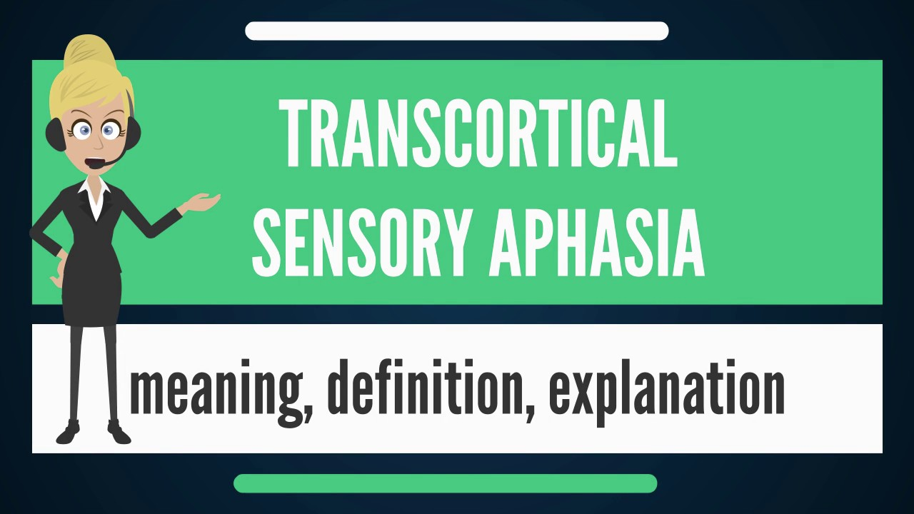 what is transcortical sensory aphasia? what does transcortical, Skeleton