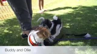 Kiss Dog Training