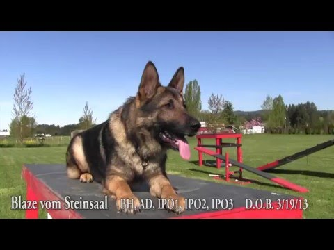 Kraftwerk K9 demos obedience and agility with a trained ...Kraftwerk K9