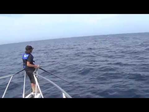 Fishing on Blackfin