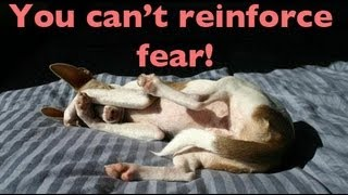 You Can't Reinforce Fear- Dog Training