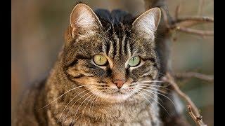Кошка ест сосиски и пьет молоко
