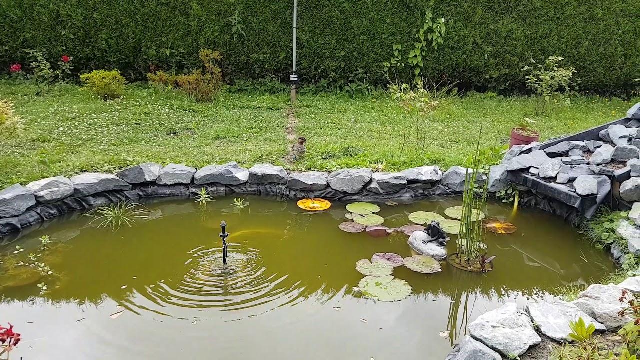 Bassin A Poisson Rouge bassin poisson rouge et karpe et mon coin coin - youtube