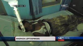 Berita tentang arwah adik Amirah Maisarah yang dijangkiti virus leptospirosis atau kencing tikus di .