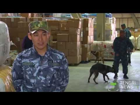American trainer brings 4 dogs to detect saiga horns in Kazakhstan