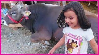 Kurban Bayramı İçin Hayvan Pazarına Geldik, Koyunlar, İnekler l Çocuk Videosu