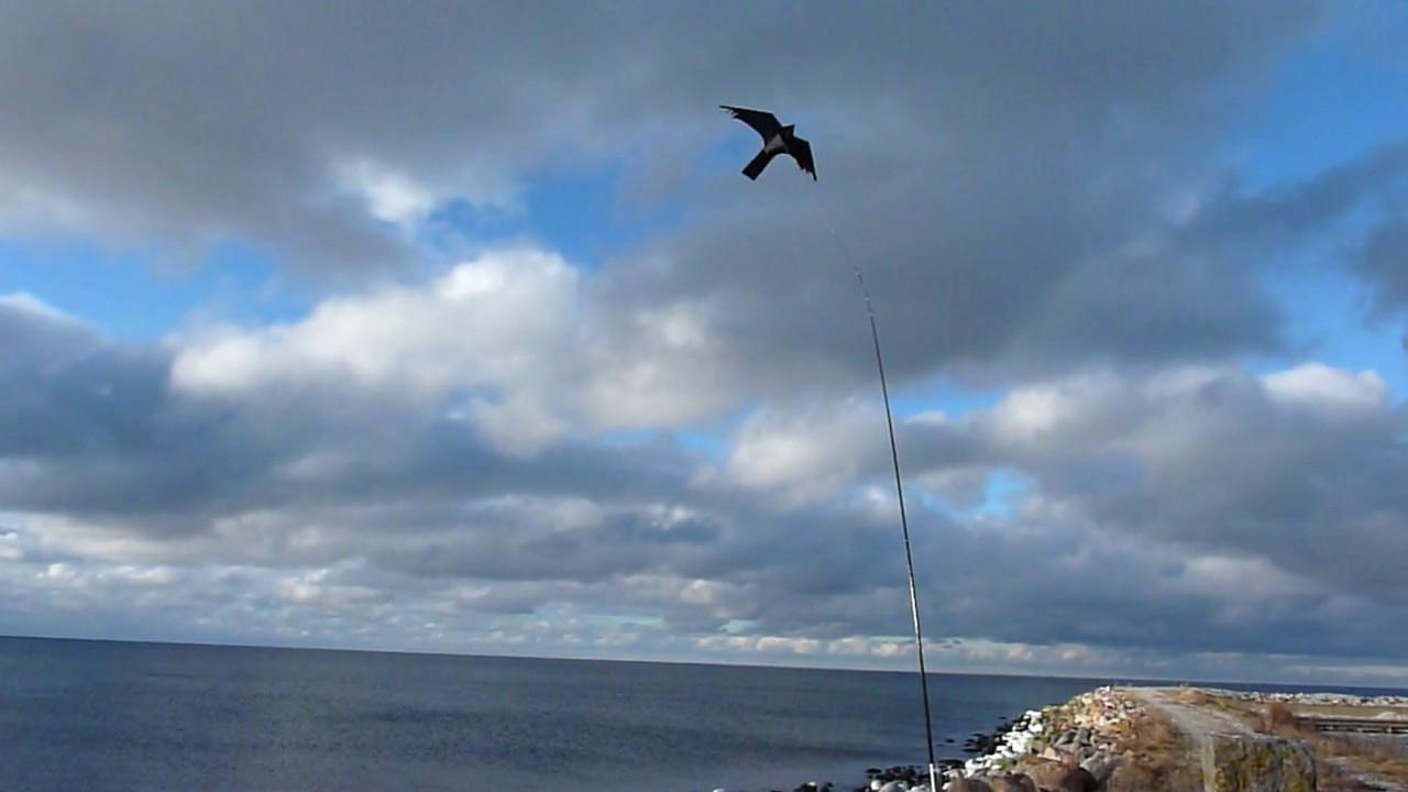 Prima Drakjohan - Fågelskrämma Blacky Hawk JA-73