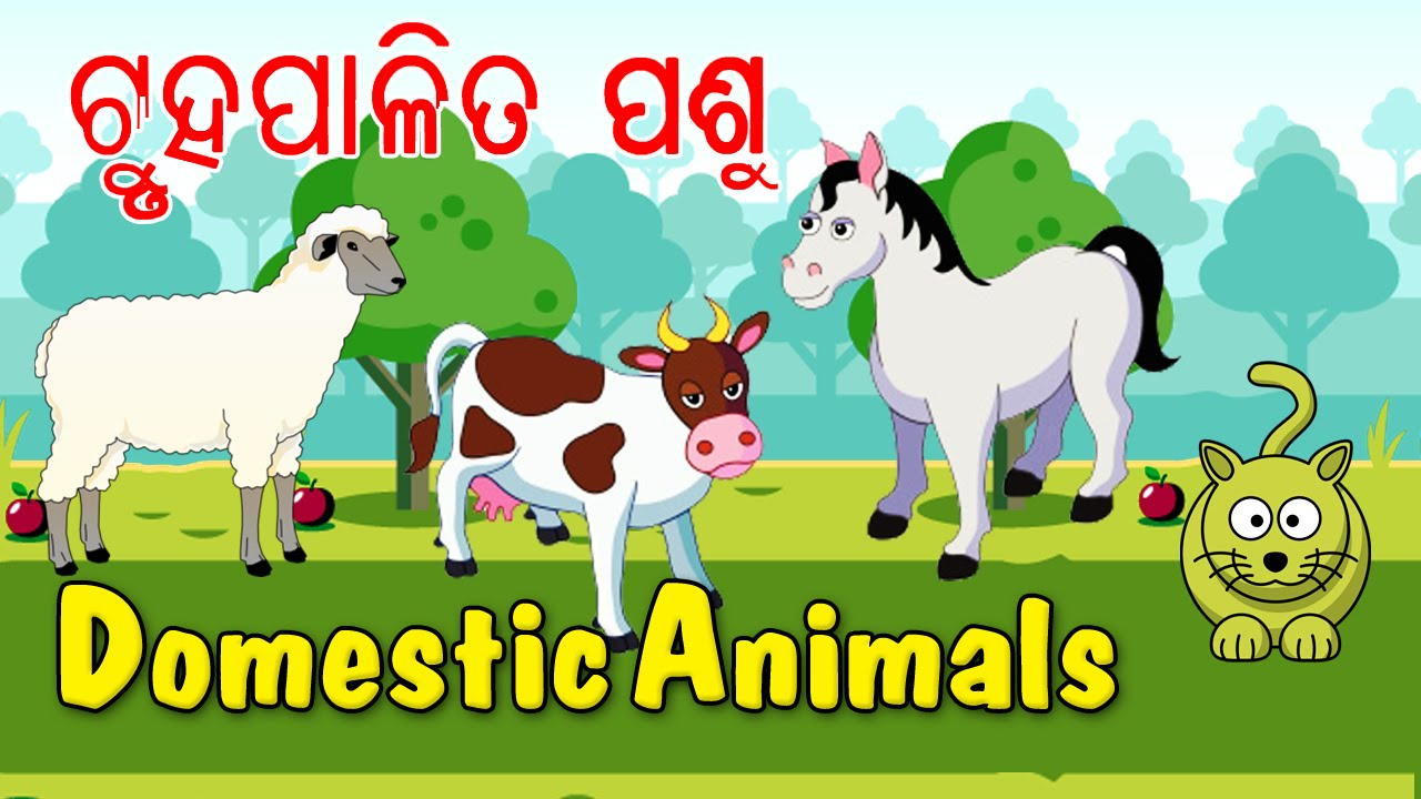 Let's Learn About Animals - Preschool Learning in Oriya | Types Of ...