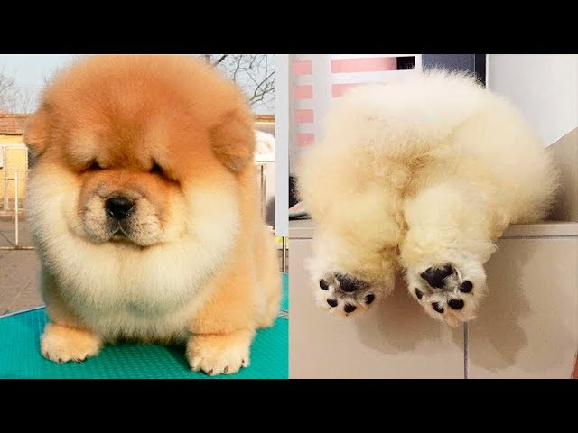 THE CUTEST DOG BREEDS In The World