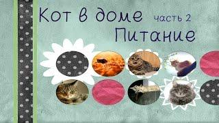 Правильное питание кошек / by Valeria Sokol