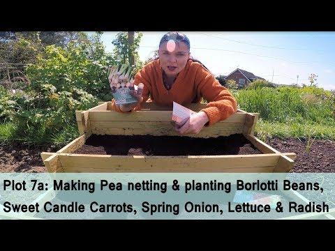 Plot 7a Allotment: Sowing Borlotti Beans, Carrots, Lettuce, Onion & Radish & Making Bean Netting