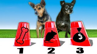 Testing our Dogs Intelligence with Dog IQ Test! PawZam Dogs